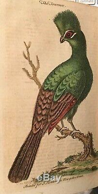 1753 Magazine Universal Rare Birds Gravures Orrery Arbres Lizard Hamlet Plongée Sous-marine