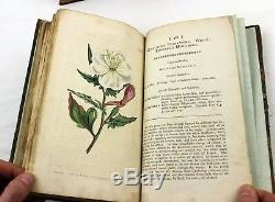 1799 Curtis Botanical Magazine 36 Assiettes En Forme De Fleurs Colorées À La Main Pour Compléter Le Volume 13